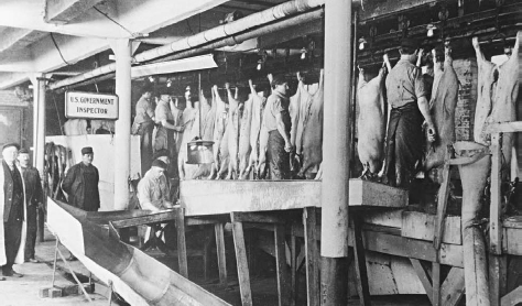 Government inspectors examine hogs at a meat packing plant in Chicago in 1906, following the passage of the law which provided for Federal approval on all meat destined for interstate commerce. Upton Sinclair charged that many inspectors were on the payro