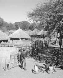 Bayei Village in Northern Botswana may provide a view of Africa similar to that experienced by the characters in The Poisonwood Bible