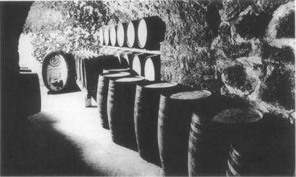 View of casks or barrels of wine aging in an underground cellar