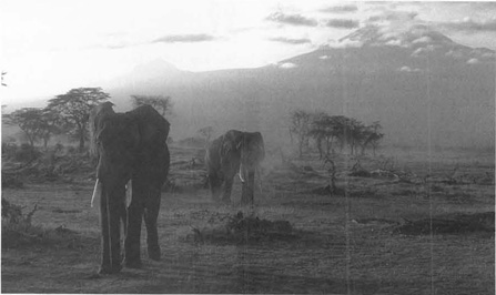 The African savanna beneath Mount Kilimanjaro serves as the setting for Hemingways story of a dying man forced to reflect upon his life.